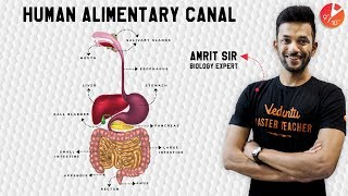 Life Process   CBSE Class 10 Science   Human Alimentary Canal   Digestive System   LabinApp Series