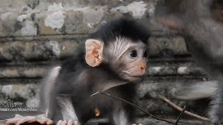 Why Mommy Want Leave New Cute Baby Alone, Daily Monkeys Man#966