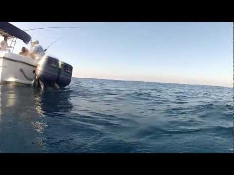 GoPro Sailfishing