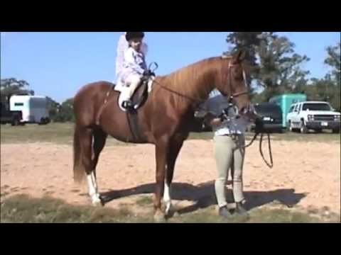 Tiger Horse Costume Costumes For Horses For Horse