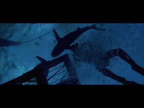 Blue Water, White Death is listed (or ranked) 20 on the list The Best Shark Movies