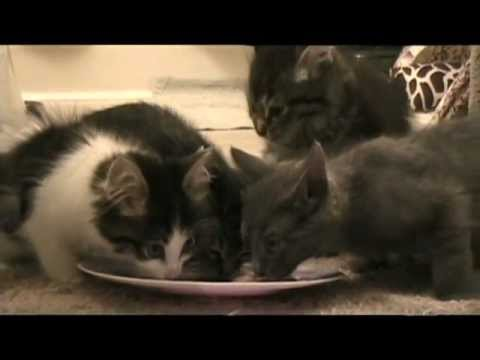 Raising Orphan Kittens by Itty Bitty Orphan Kitty Rescue