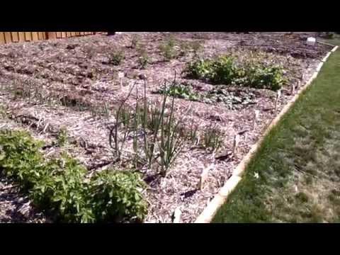 Different Methods of Gardening - Mittleider. Back to Eden