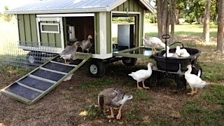 Portable Goose Wagon Coop and Pond with Rain Catchment System