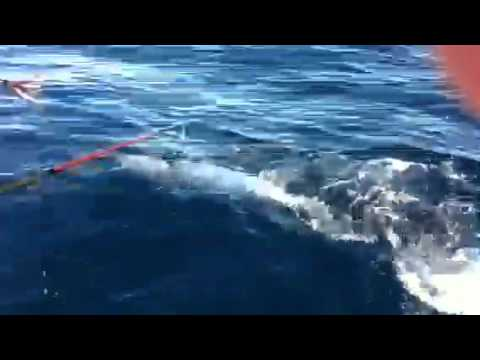 Wahoo fishing off coast of Salinas, PR part 2