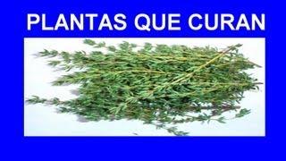 Propiedades del Tomillo como Planta Medicinal.
