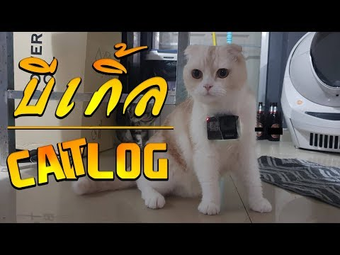 001 - ทดลองมุมกล้อง GoPro7 บีเกิ้ล CAT-LOG
