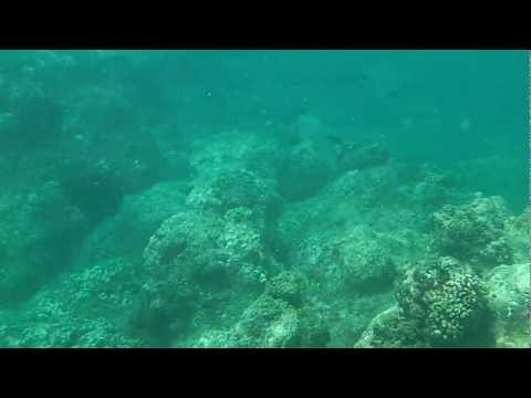 Snorkeling at Princeville, Kauai - Lots of fish