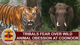 Tribals fear over Wild Animals Obsession at Coonoor | Thanthi TV