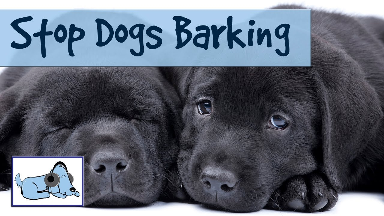How To Get Your Dog's Barking Under Control