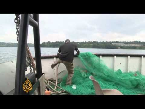 Uganda's fish stocks in decline in Lake Victoria