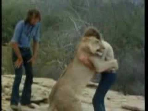Christian the Lion - from cub to reunion, set to music & auroras - from EveryoneLovesCoffee.com