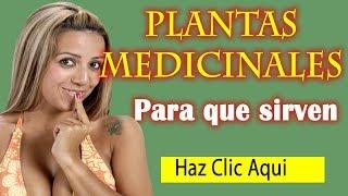 Plantas Medicinales y Para Que Sirven - Tipos y Beneficios de las Plantas Medicinales