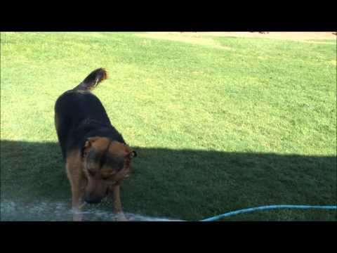 Cute Toddler And Dog Play With Water Hose video