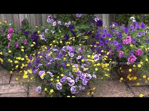 My Summer Garden - My Little Purple Eden