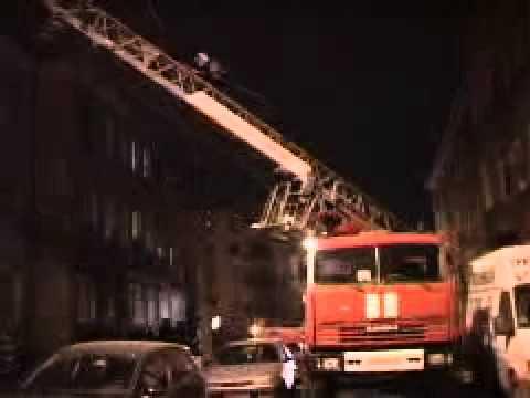 Калининградского енота ловили полицейские и МЧС