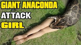 ANACONDA ATTACK AND SWALLOWS GIRL   BIGGEST PYTHON SNAKE ATTACK HUMAN   ANIMAL FIGHT