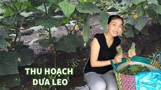 """H&M Vlog l Phát Hiện """" Được Ăn Dưa Leo Tại Vườn Quý Như Kho Báu"""""""