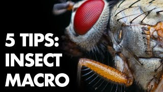 5 Tips for Freehand Insect Macro Photography