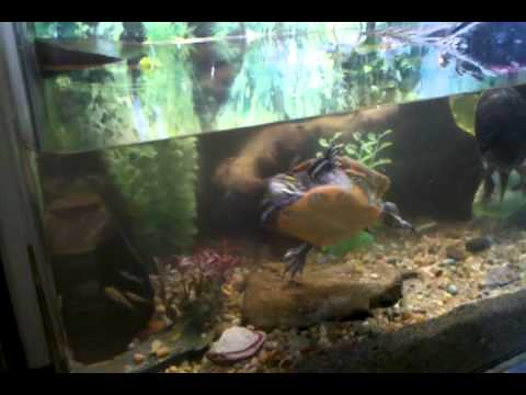 180 Gal custom turtle terrarium(private residence)