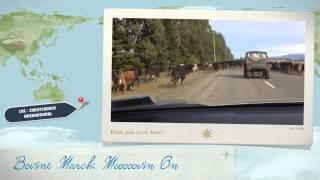 Bovine March