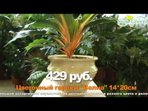 Керамические кашпо для комнатных растений