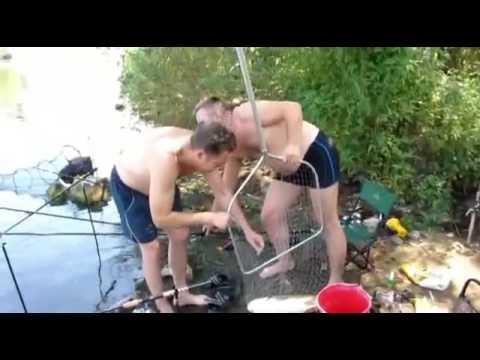 видео прикормка и ловля белого амура