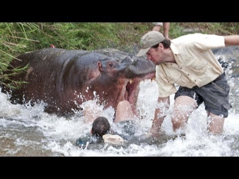 World's Most Deadly Animals!