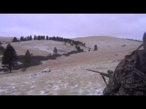 Coyote Control Specialists Episode#7, Shotgun Kill, 3 Coyotes, Calling Coyotes