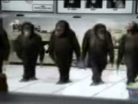 Monkeys River Dancing Dancing Monkeys Riverdance