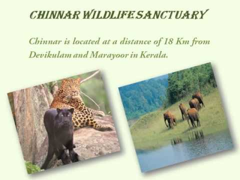 South India Wildlife Tour Packages