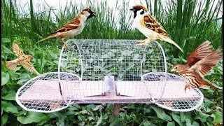 How to Make Electric Fan Bird Trap at Home - Amazing quick Sparrow Old bird trap Easy! 108