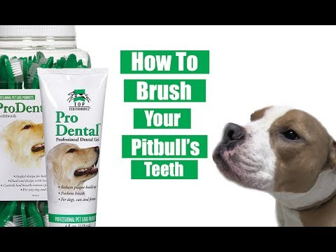 How To Brush Pitbull Teeth