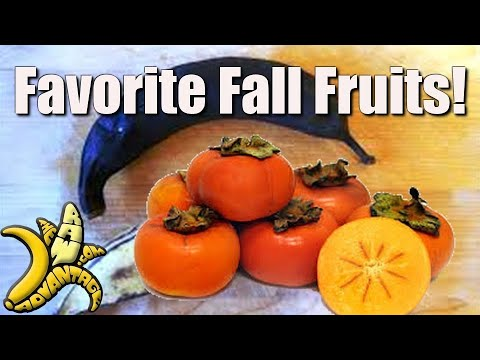 Chris Kendall The Raw Advantage – favorite fall fruits :)