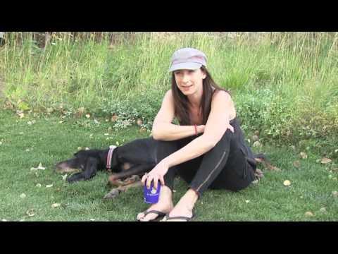 perros - El perro con las orejas mas grandes del mundo