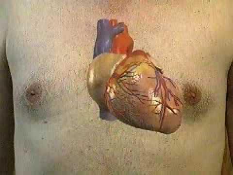 El cuerpo humano. Las válvulas cardíacas.