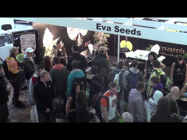 Cannafest 2013 Eva Seeds