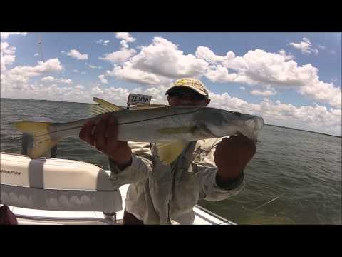 Fishing the Flats of Tampa Bay. Catching Snook, Flounder, Spotted Sea Trout, and Shark.