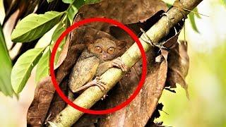MOST BIZARRE Monkey Species