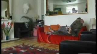 Trigger Happy Tv - Pest Control (Rat)