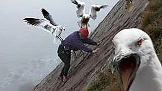 13 Craziest Animal Attack Pictures Explained