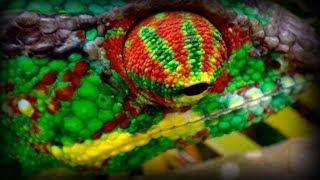 Madagascar: Hijos de Lemuria (documental completo)