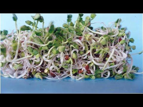 Clique e veja o vídeo Curso Produção de Brotos Comestíveis