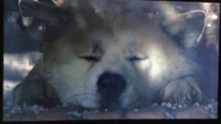 The ending of the movie Hatchi a dogs tale.