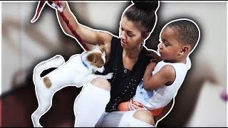 DJ GOT BIT BY A DOG | THE PRINCE FAMILY