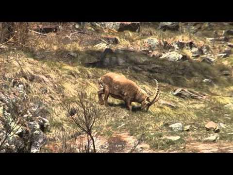 Fauna nel Parco Nazionale del Gran Paradiso