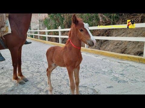 Video viral caballo enano y DISEÑO DE BULEVAR San Antonio – Ediciones Mendoza