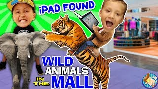 TIGER RIDES in a MALL! + Found Lost iPad $$$$ FUNnel V Vlog