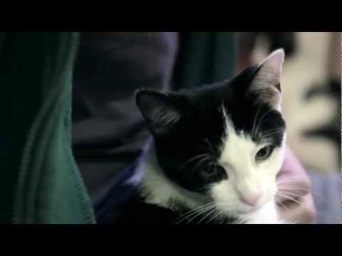 I Could Pee On This: And Other Poems By Cats video