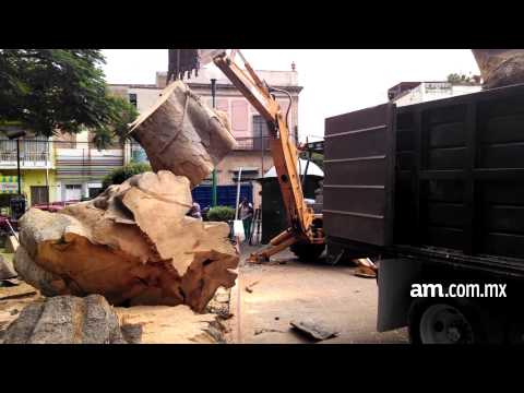 Talan árbol de 90 años en San Juan de Dios